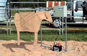 Mounted on a fence with fake cow